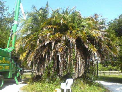 Palm Trees Before